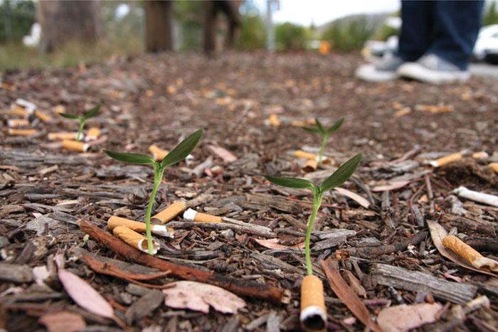 Ben Forman a developpé un concept de cigarettes écologiques en imaginant qu'on pourrait y intégrer une graine et qu'en jetant le mégot dans la nature, il se transfome alors en plante !