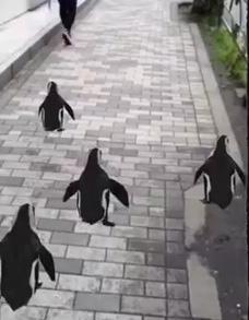 Des pingouins virtuels emmènent les visiteurs jusqu'au Sunshine Aquarium de Tokyo