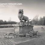 Les lionnes se reposent aux pieds de roi de la jungle le Lion