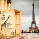 Adeline la Girafe est de retour à Paris et s'est inscrite sur Twitter !