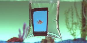le poisson suffoque quand il est hors de l'eau