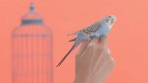 les images sont colorés et amusantes et donnent envie d'aller à Maisons du Monde