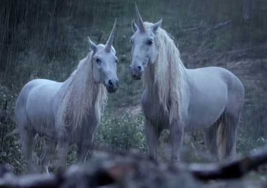 canal + lève le voile sur la disparition des licornes avec betc