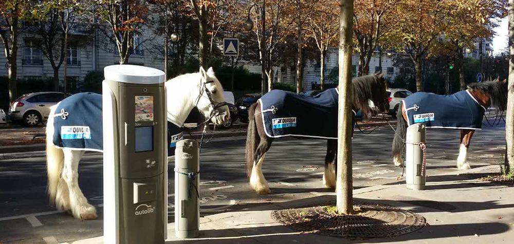 Equidia a investit une station Autolib' parisienne qu'elle a transformé en Equidia Lib'