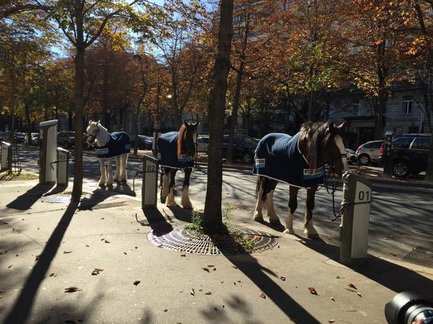 Equidia échange les voitures contre des chevaux