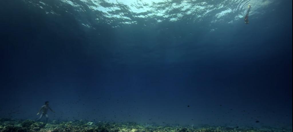 Des images à couper le souffle par leur beauté qui nous font découvrir les fonds marin de la Polynésie