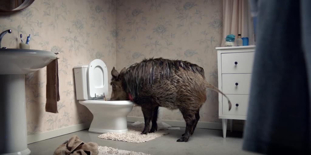 Canal + met en scène un animal de compagnie un peu encombrant
