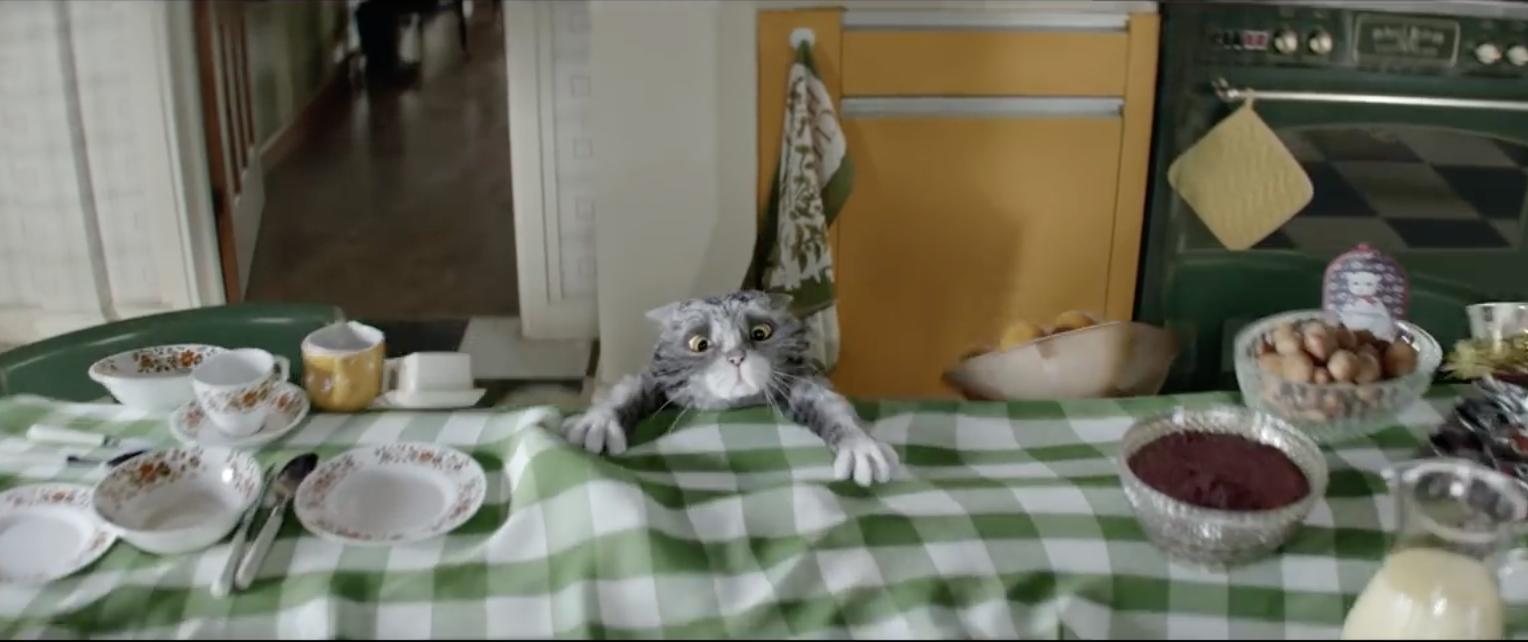 Sainsbury's met en scène Mog, un chat très maladroit