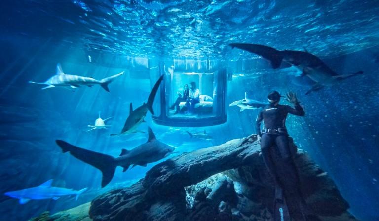Fred Buyle, champion d'apnée et passionné de requins plongera dans l'aquarium pour faire les présentations