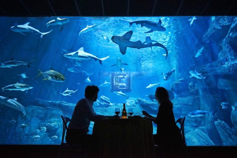 Un dîner intimiste sera servi aux gagnants avec vue imprenable sur le lieu de vie des requins