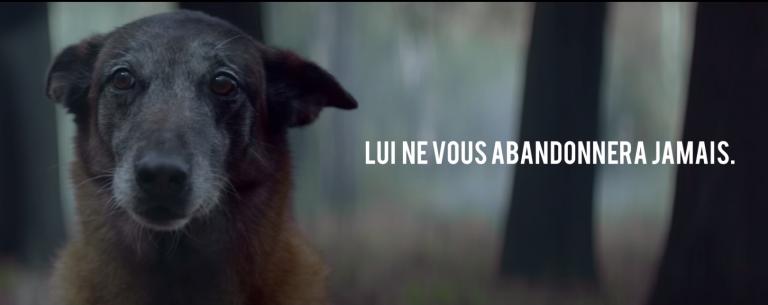 Buzzman met en scène le paradoxe entre l'amour inconditionnel de l'animal pour son maître face à la lâcheté de certains êtres humains