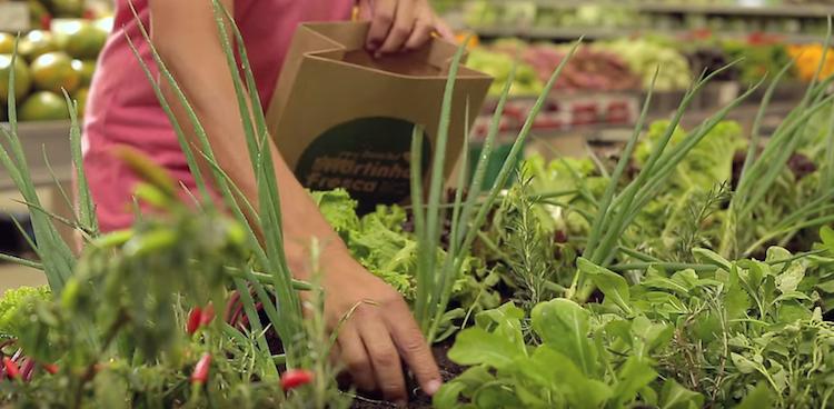 Zona Sul propose des fruits et légumes à cueillir soi même au Brésil