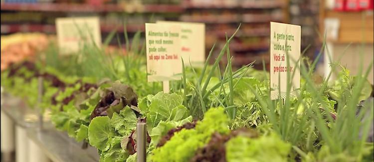 Au Brésil, Zona Sul propose des carrés de potager pour cueillir soi même ses fruits et légumes en magasin