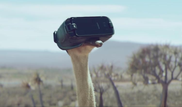 Alors qu'elle recherche à manger, une autruche un peu trop curieuse enfile par mégarde un casque Gear VR et se retrouve en plein simulateur de vol