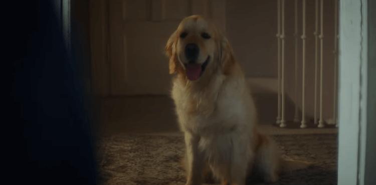Cette année, pas de double sens mais un seul message : quand le chien abandonne son maître ce n'est pas pour partir en vacances.