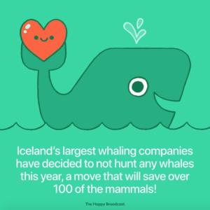 Plus de chasse à la baleine en Islande cette année