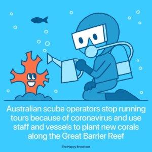 Les australiens ont planté des coraux