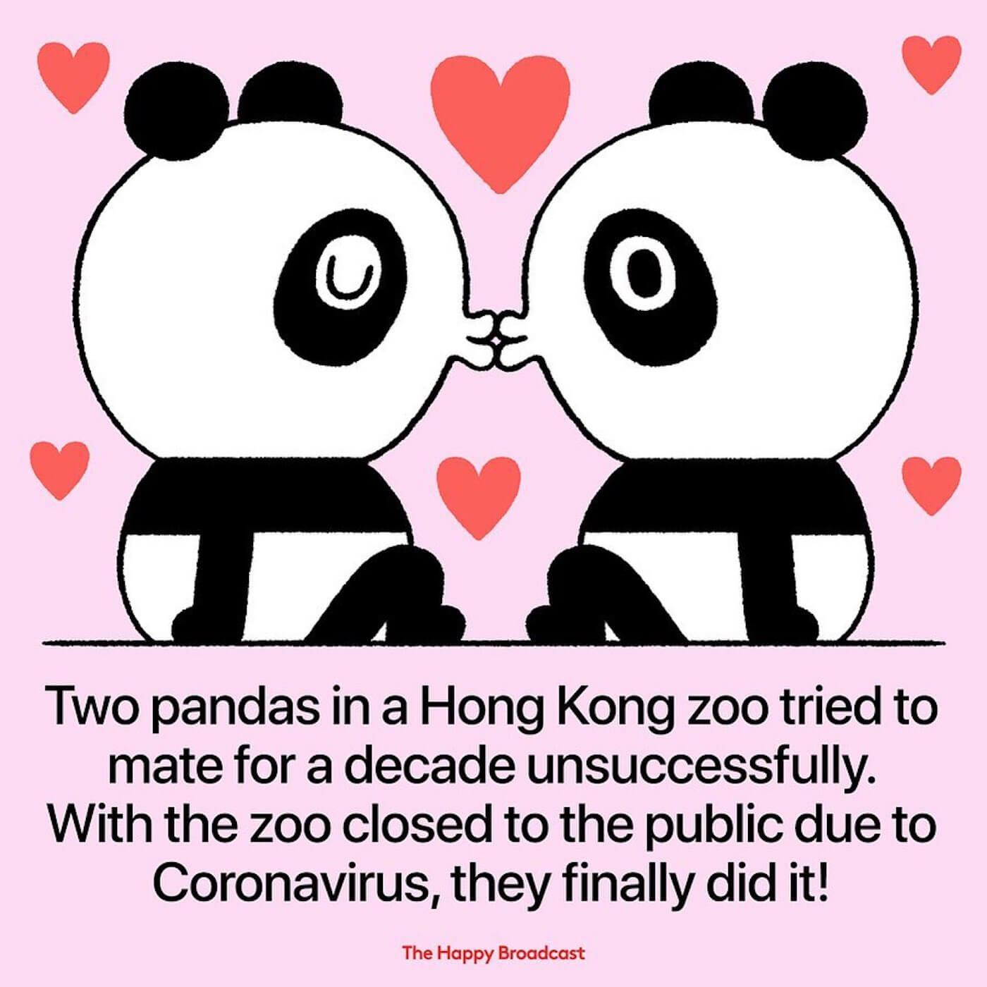 2 pandas ont enfin réussi à s'accoupler