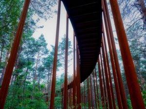 Cette construction se veut écologique puisqu'elle utilise des colonnes en acier corten, symbolisent les troncs droits des pins